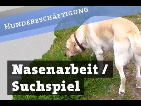 Nasenarbeit - Suchspiel für Hunde - Leckerlisuche Hund Beschäftigung Hundebeschäftigung