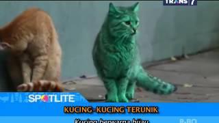 Download Video SPOTLITE - Kucing-Kucing Terunik di Dunia MP3 3GP MP4