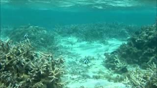 Flic-En-Flac Mauritius  City pictures : 2013-09-29 - Snorkeling in Flic en Flac - Mauritius