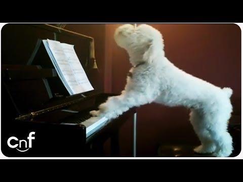 canta e suona, il cane delle meraviglie!