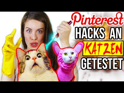 KRASSE PINTEREST HACKS AN KATZEN LIVE GETESTET! 😱 LIFE HACKS im TEST   DIY CAT & HUNDE LIFEHACKS
