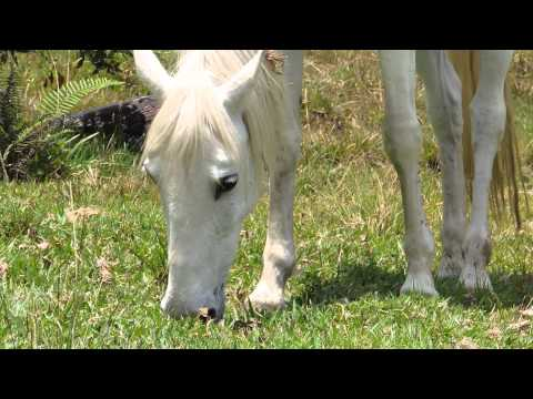 Caballos salvajes apareandose videos videos relacionados con caballos salvajes apareandose - Animales salvajes apareandose ...
