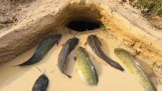 Amazing Muddy soil Hole Trap - Smart Man Build Fish Trap By Muddy soil- Get Alot of Fish 100%