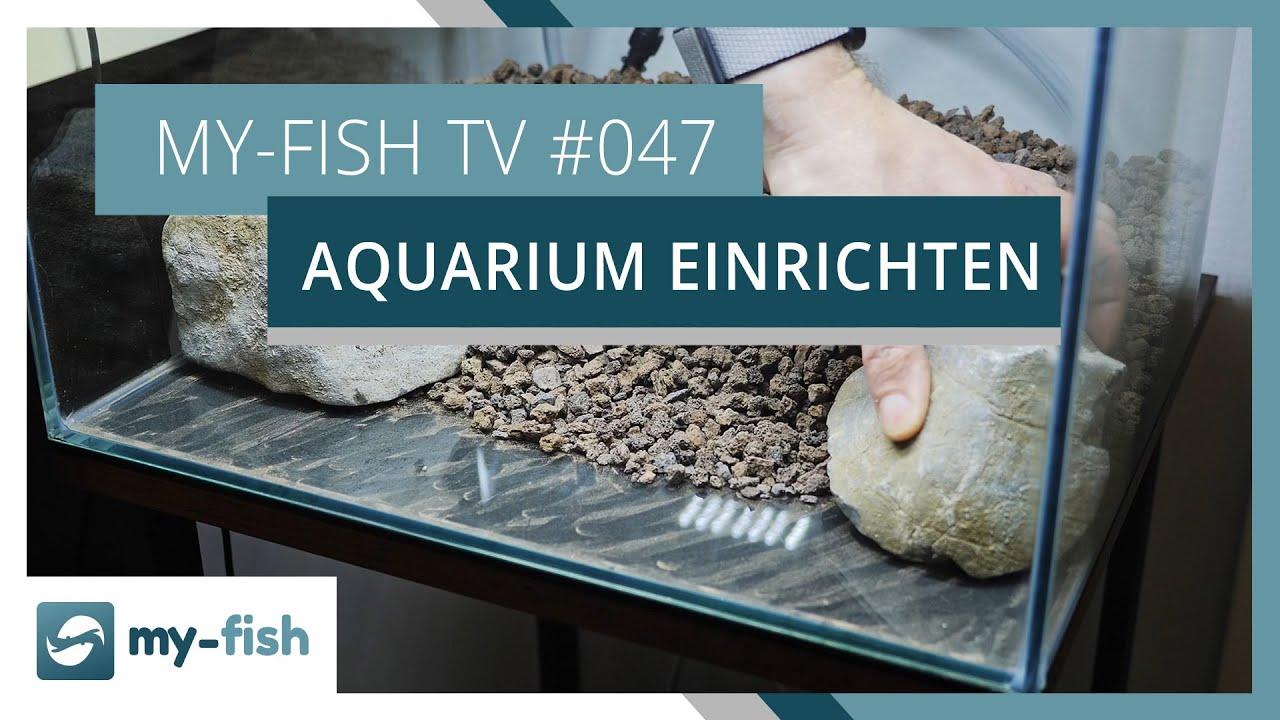 my-fish TV - Deine Nr. 1 Anlaufstelle für alle Themen rund um die Aquaristik 17
