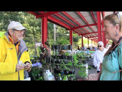 How to Get Started Growing and Selling Medicinal Herbs