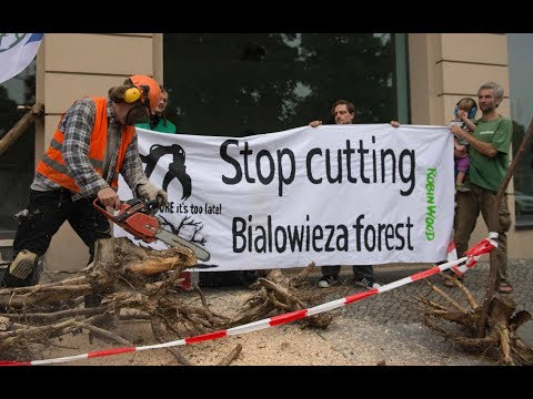 Europäischer Gerichtshof: Polen verstößt mit Abholzung in Urwald gegen EU-Recht