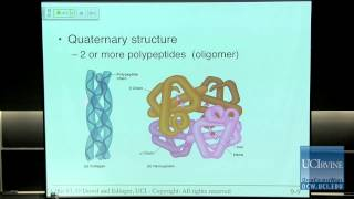 Bio Sci 93: DNA To Organisms. Lec. 9: Proteins And Nucleic Acids