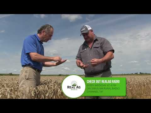 Wheat School -  Real Wheat Growers -  Shawn Schill