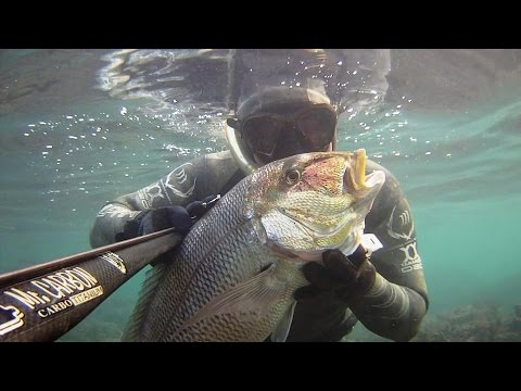 pesca sub: dentice d 6,5 kg! che cattura!