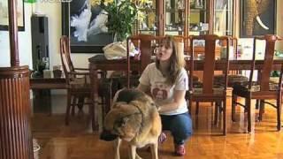 Inside Story - Dr Dog