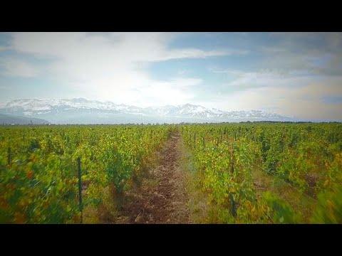 Αλμάτι, Καζακστάν: Κρασί μεγαλωμένο σε γαλλικά δρύινα βαρέλια