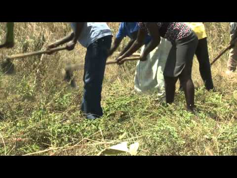Agricultural Support in Northern Uganda