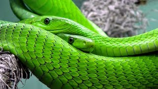 Snake Song for children - Learn about slithering snakes - Songs for kids