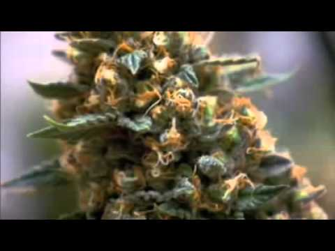 marihuana - Rate & Share & Sub to legalize cannabis !!! @I do not own any rights.