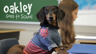 Nonton Ep 10  Oakley Goes To School   Cute Dog Video School Day Film Subtitle Indonesia Streaming Movie Download