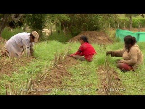¿Qué revela el Censo Nacional Agropecuario en lo Social?