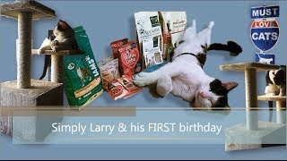 Simply Larry & his first birthday (#17) is a film from the serie about my cat Larry. He is one year old here. For his birthday I bought him a lot of fancy ca...