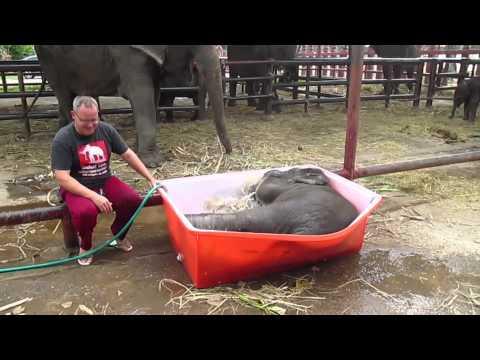 il primo bagnetto dell'elefantino
