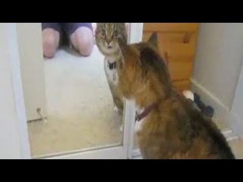 Funny Animals vs Mirrors Compilation 2015