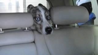 Psi horror w myjni samochodowej
