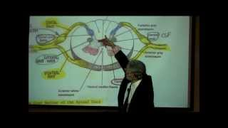 THE SPINAL CORD&SPINAL TRACTS; PART 1 By Professor Fink