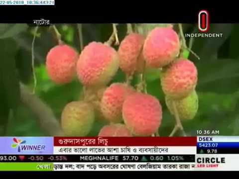 Litchis of Gurudaspur Per thousand selling at Taka 1200-1600 (22-05-2018)