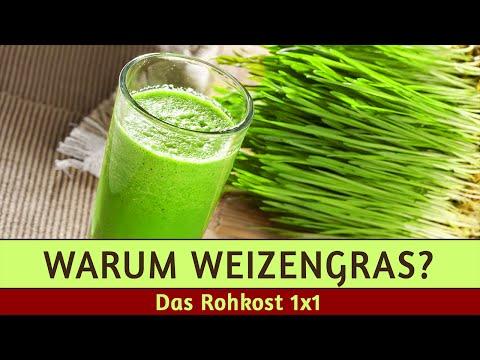 Weizengraspulver - Meine Geheimwaffe im Winter (+Kauftipp)