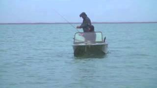 рыбий жир ловля жереха