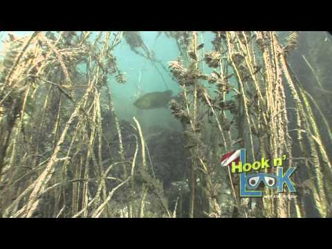 Hook n' Look's Under Water EcosystemHook n' Look's Under Water Ecosystem<media:title />