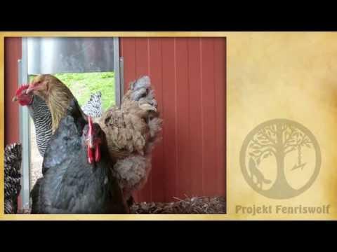 Hühnerstall automatisch öffnen - schließen - Test Axt ekeltronischer Pförtner