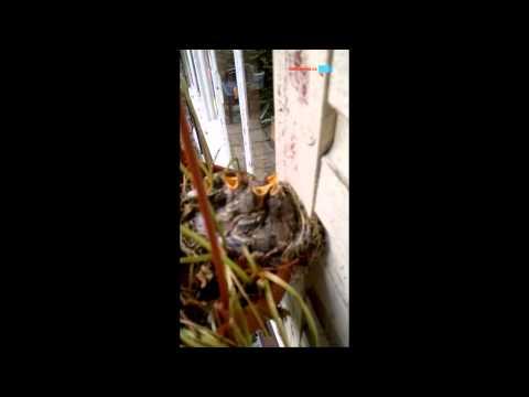 Misto jahod ptačci