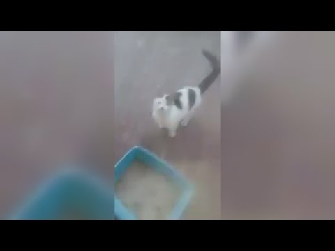 Guy Throws Boiling Water On Cat