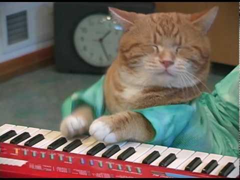 keyboard cat - il ritorno