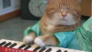 Клавиатурная кошка 2.0