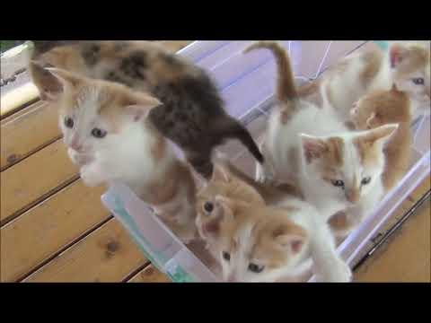 Gatos Bebes  maullando
