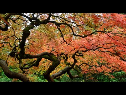 Portland Japanese Garden 20141025 1080p HD (видео)