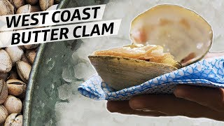 Diving for World Class Butter Clams Off the Coast of Oregon — Deep Dive by Eater