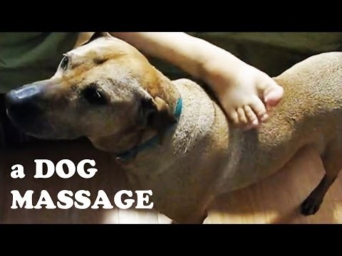 Dog Home Spa Massage – Body Itching Rubbing Scratching – Very Funny Dogs Videos DogsCircle Jazevox