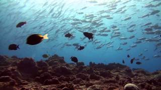 Extra footage from my Scuba Diving trip to Palau in February 2013. Those shots were good enough to be uploaded, but did not...