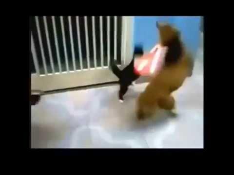 Jedi Cat - Paw Wars