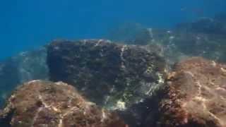 Sant Antoni de Calonge Spain  city images : Snorkel Costa Brava | Sant Antoni de Calonge #Snorkeling