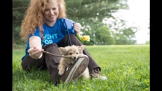 Fighting for all animals—even in the midst of COVID-19 by The Humane Society of the United States