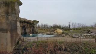 Polar Bear fight in Rotterdam zoo  Diergaarde Blijdorp Giraffe in Diergaarde Blijdorp  https://youtu.be/At1gTItWSBoFinding nemo in the zoo  Diergaarde Blijdorp https://youtu.be/71ldFchKvK8