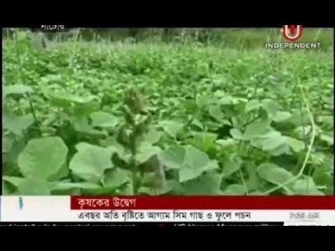 Edamame bean farmers in woe (20-10-2017)