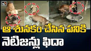 ఆ శునకం చేసిన పనికి నెటిజన్లు ఫిదా: Dog Rescues Puppy From Floodwater in Karnataka