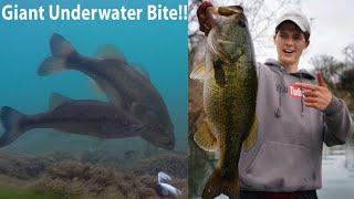 Video GIANT Spawning Bass W/Underwater Footage! | TylersReelFishing MP3, 3GP, MP4, WEBM, AVI, FLV Mei 2019