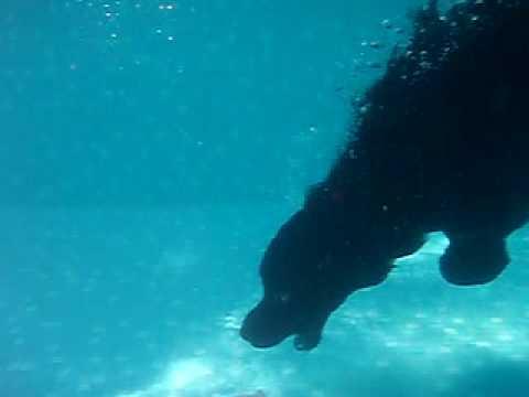 recupero sott'acqua di un cao de agua