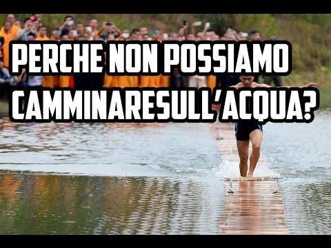 curiosità in 1 minuto: perché è impossibile camminare sull'acqua?