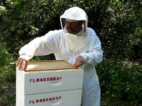 How Bees Make Honey With Steve The Beekeeper