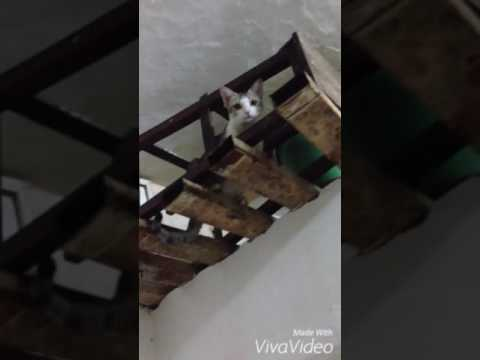 Super crazy cat
